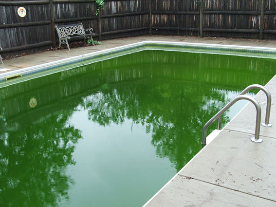 Algae Problems How To Get Rid Of It Fast Vincent Pools